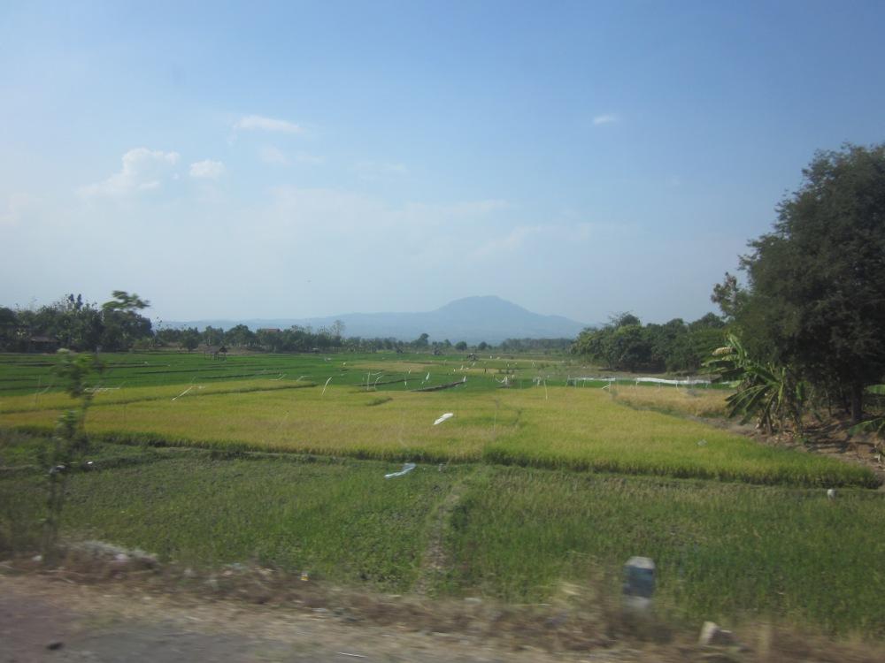 Java Scenery