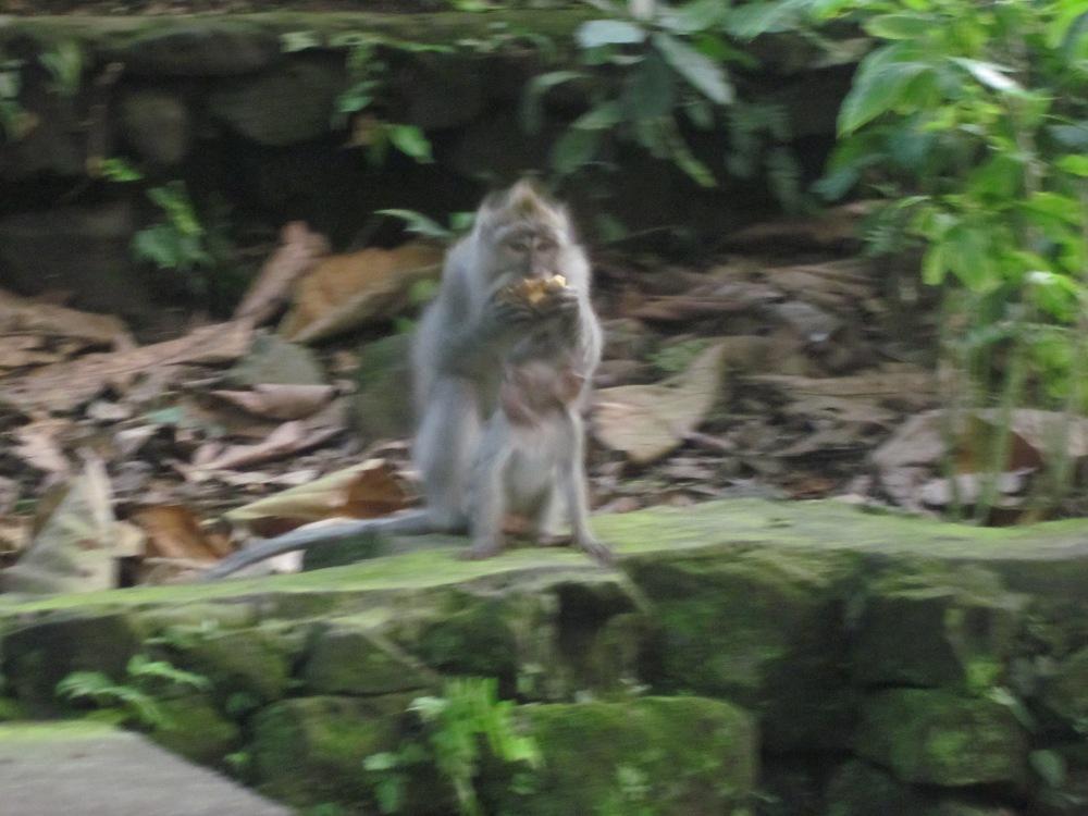 Snacking monkey