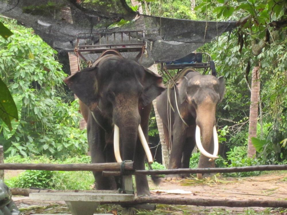 Na Muang Elephants