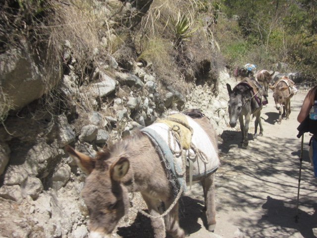 The only day we saw donkeys since they weren't allowed once we got to the real Inca Trail