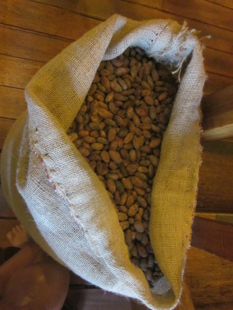 Cacao beans from the Choco Museo