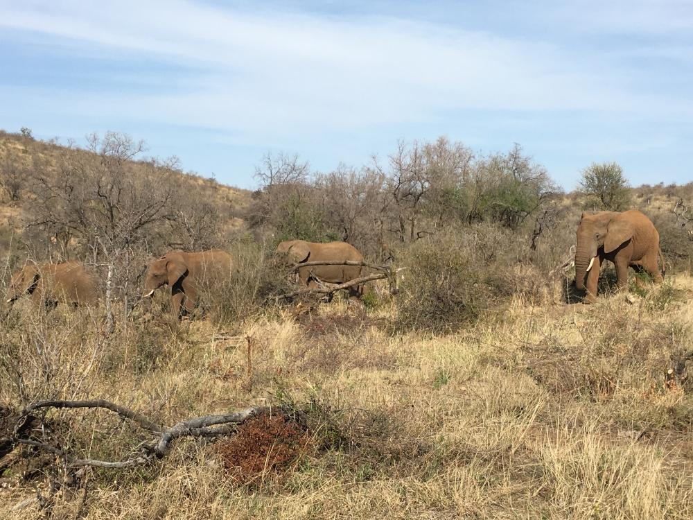 elephants outside room